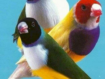 Colorful birds. - Animal puzzle ..