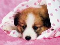 Малко куче за Марчин