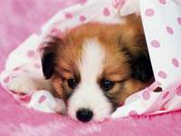 Marcin kis kutya - Kicsi és édes kutya Marcinnak :)