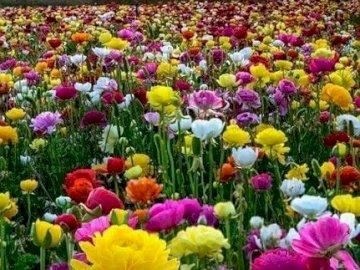 Campo de flores. - Rompecabezas de flores.