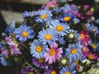 Květiny na zemědělském trhu - Selektivní zaměření květin. Los Angeles, CA