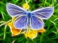 Pillangó egy virág - Kék pillangó a virágon
