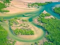 Luftaufnahme des Mangrovenwaldes