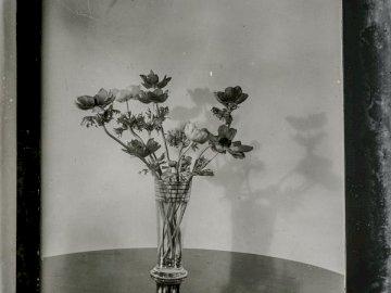 Vintage floral slide, - Grayscale flowers artwork. New Forest National Park, UK