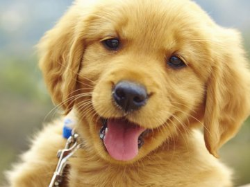 Puppy - sweet dog, picture for children