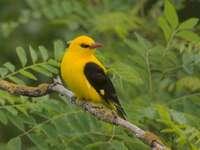 Un uccello che siede su un ramo.