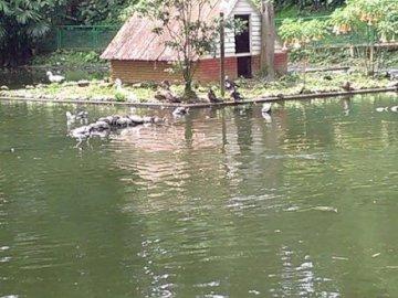 dom kaczek - to piękny obraz jeziora