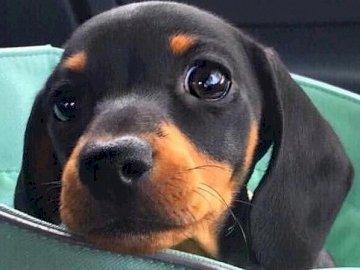 Γλυκό σκυλί
