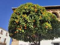 Paisagens da Andaluzia 3