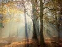 Podsvícený les