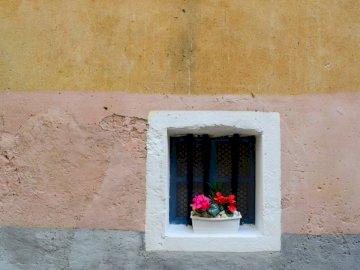 Winzige Fensterbox - Rosa Blütenblattblume nahe Fenster am Tag. Griechisch / Italienisch, Italien