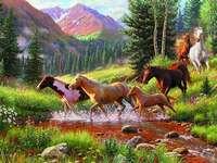 Free horses.