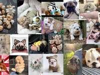 koláž různých zvířátek - koláž různých zvířátek