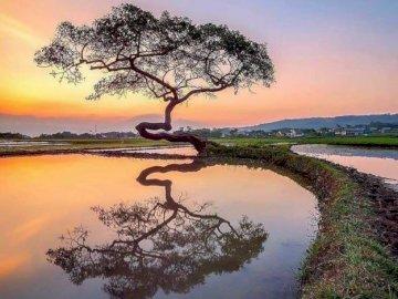 Odbicie w wodzie - Drzewo odbija się w wodzie ze słońcem w tle