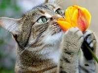 Kitten with a tulip.