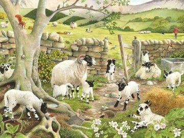 English sheep. - Animals: English sheep.