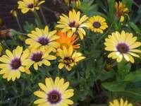 Marise flores - Marise flores