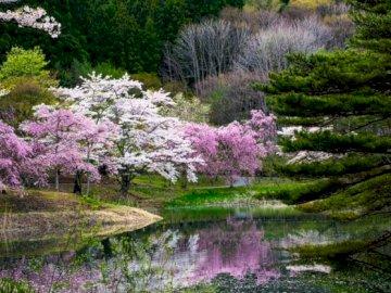 Przepięknie - Piękna przyroda,piękne kwiaty