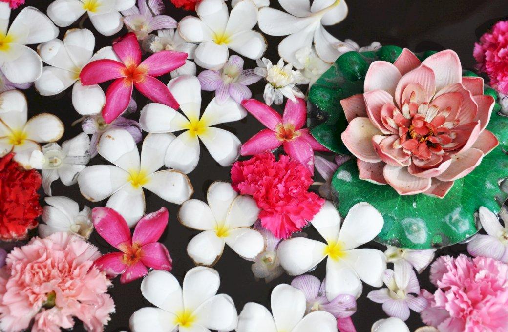 Krásné květiny fotografie puzzle