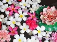 Piękne kwiaty fotografia