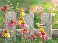 Flores em cima do muro. - Kwiatowa układanka