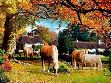 Autumn in Hampshire. - England. Autumn in Hampshire.