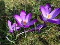 De lente komt eraan - De lente komt eraan, we zoeken haar!