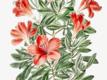 Orange blommor - Pussel blommiga inspiration