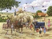 Vara în mediul rural