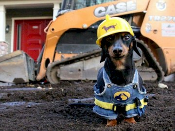 Hardworking dachshund - It is beautiful this worker with his site uniform