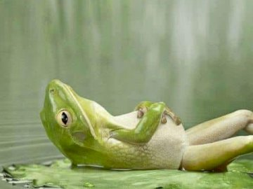A resting breaststroke. - A resting green frog.