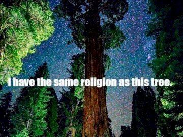 nature is my religion - i have the same religion as this tree