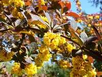 Flores amarillas en una rama