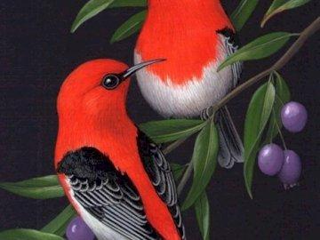 Mundo de las aves. - Puzzle mundo de pájaros.