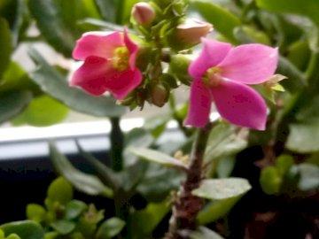 Wiosenny kwiatek - pierwszy wiosenny kwiatek