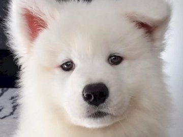 Sweet dog - A sweet white dog that I would like to have
