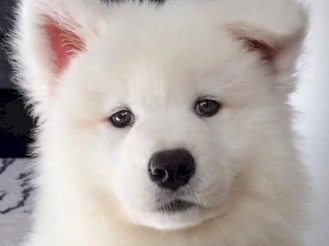 Süßer Hund - Ein süßer weißer Hund, den ich gerne hätte