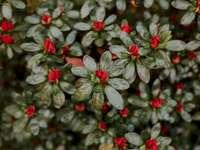 Flores rojas en flor