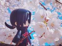 Itachi in a cherry tree - The arrival of spring marks the heyday, the beautiful flowers