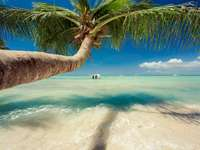 DOMINICAN REPUBLIC - Margarita vacation under palm trees