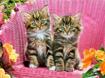 Két cica - Puzzle gyerekeknek: cica.