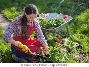 swietliki - sadzi, pieli i podlewa potem patrzy jak dojrzewa