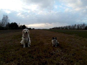 Perros en el campo - Esta es una foto de perros en un campo.