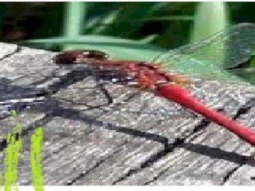 libélula y naturaleza - Este es el paisaje con libélula.