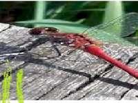 vážka a příroda