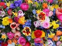 Hübsche Frühlingsblumen - Sie sind alle diese bunten Blumen schön