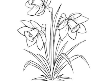 daffodil puzzle - Picture to cut and assemble from parts.