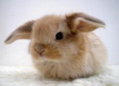cute rabbit online puzzle