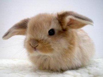 lindo conejo -