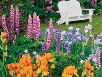 Verano en el jardin - Verano en el jardín, flores, banco blanco